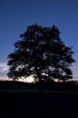 Baum im Sonnenuntergang 2