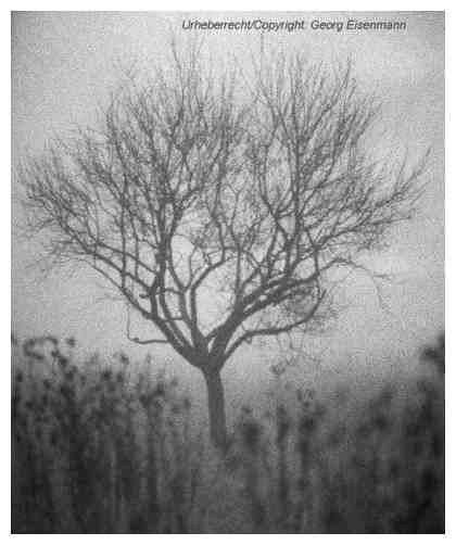 Baum im spätherbstlichen Nebel