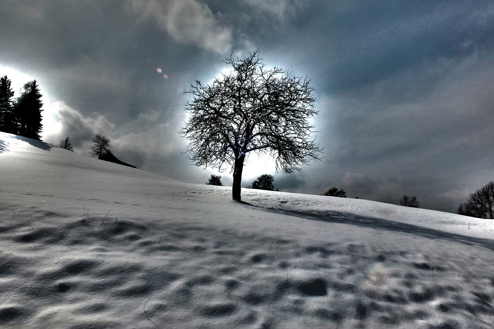 Baum im Spezialeffekt