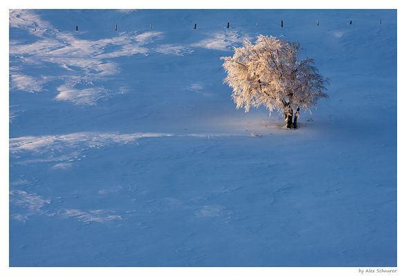 Baum im Spotlight