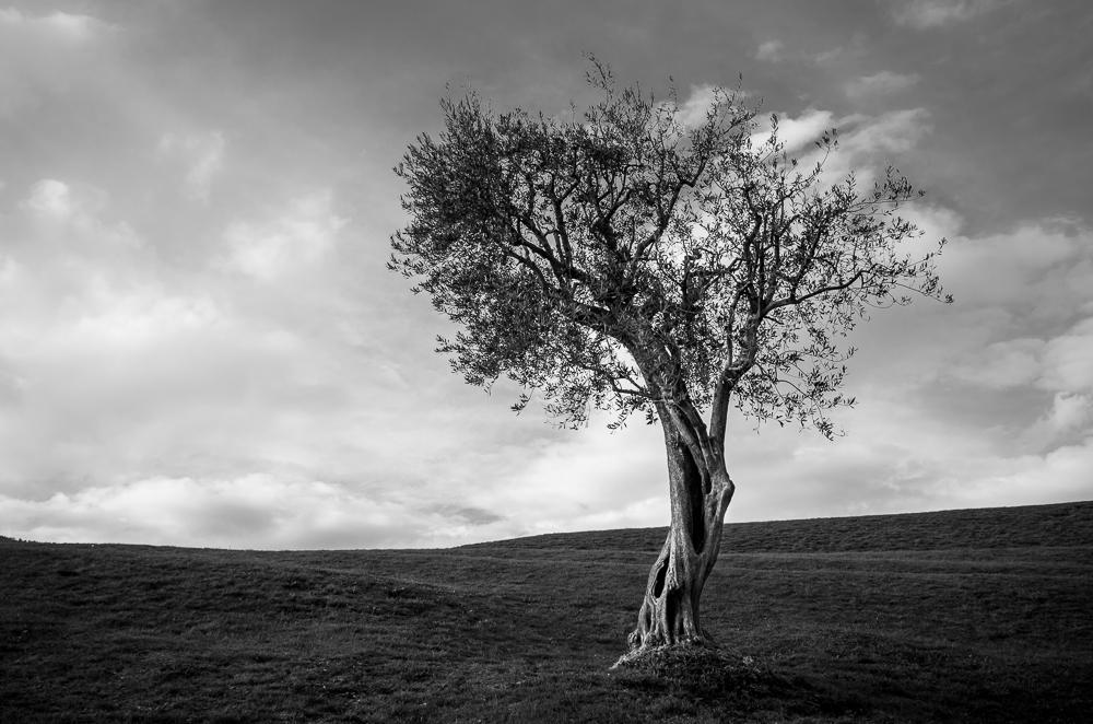 Baum im Tessin