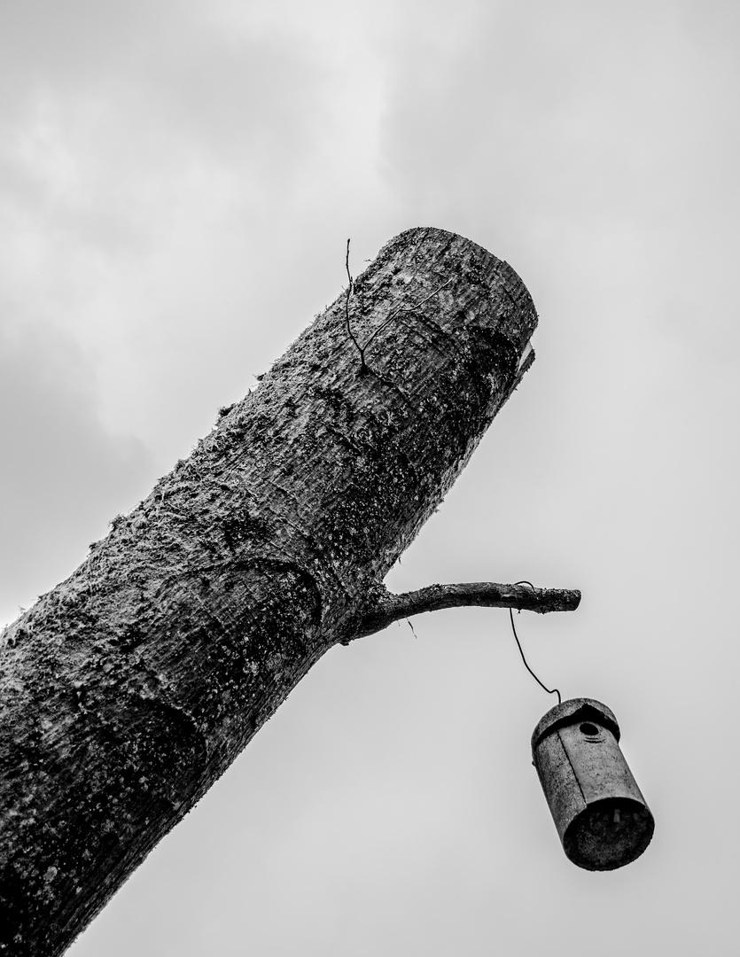 Baum im Traum