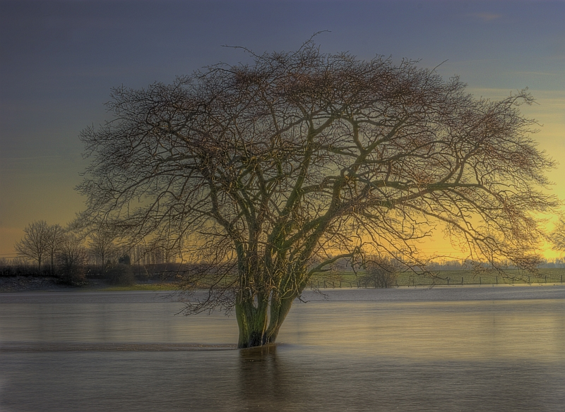Baum Am Wasser : baum im wasser foto bild landschaft natur bilder auf ~ A.2002-acura-tl-radio.info Haus und Dekorationen