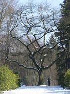 """""""Baum im Weg""""!"""