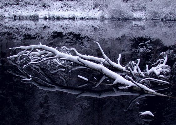 Baum im Weiher