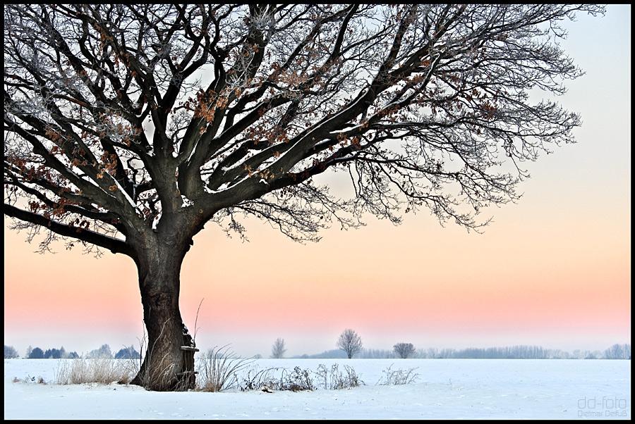 Baum im Westicker-Feld C