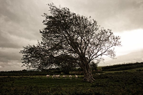 Baum im Wind