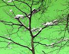 Baum im Winter einmal anders