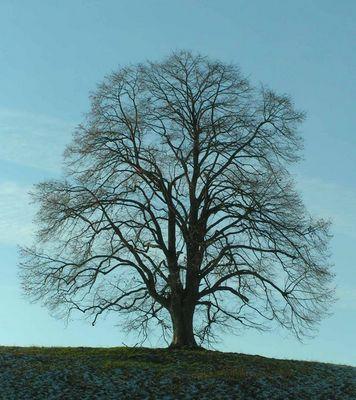 Baum im Winterkleid.......