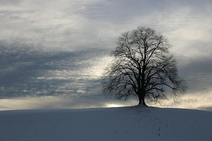 Baum im Winterlicht 2