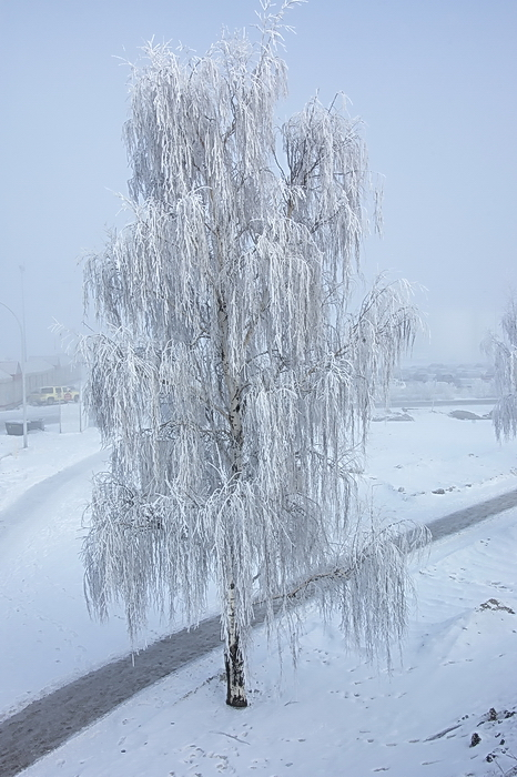 Baum im Winternebel