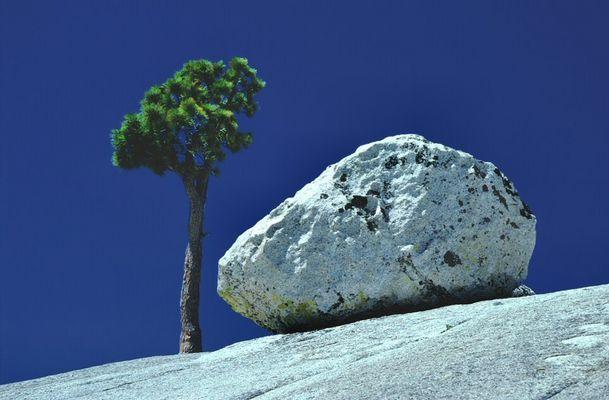 Baum im Yosemite Park