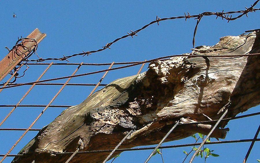 Baum im Zaun... und eine Fliege