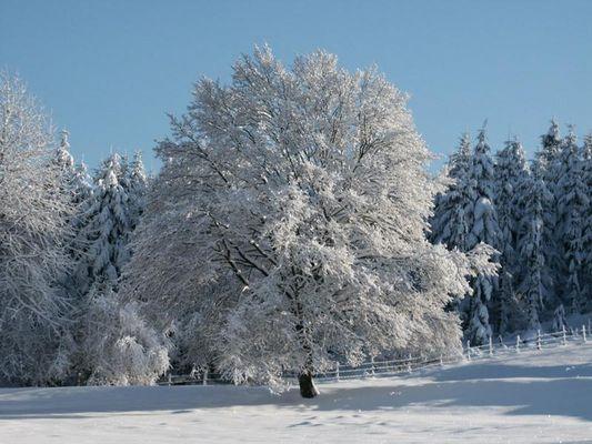 Baum imWinter 2001
