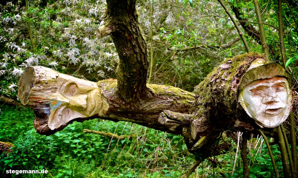 Baum in Billerbeck Münsterland
