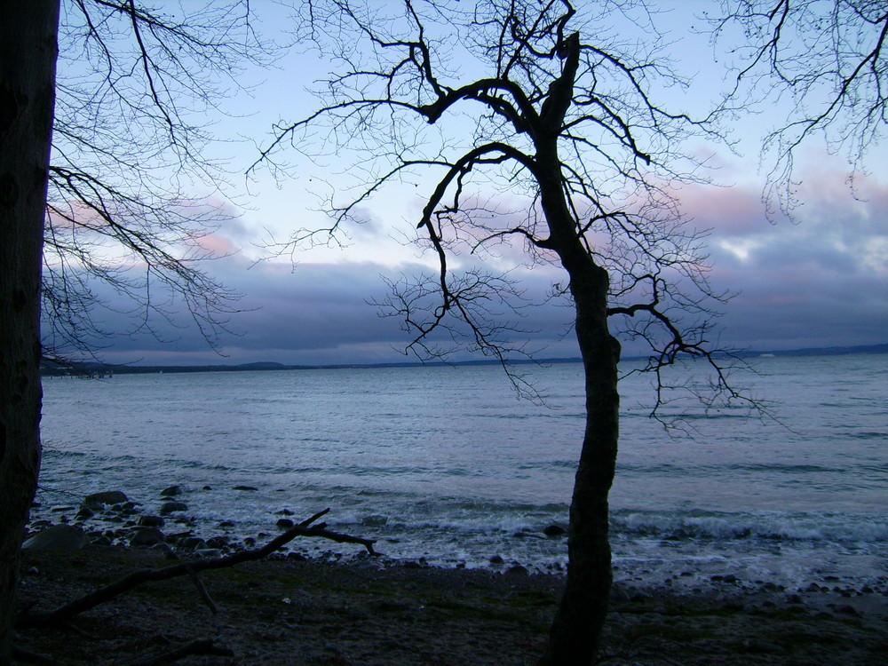 Baum in Binz