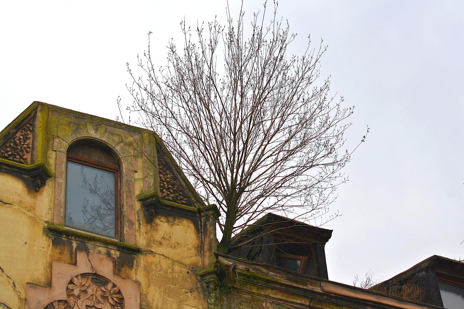 Baum in Bruckhausen