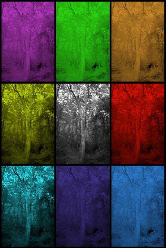 Baum in bunt