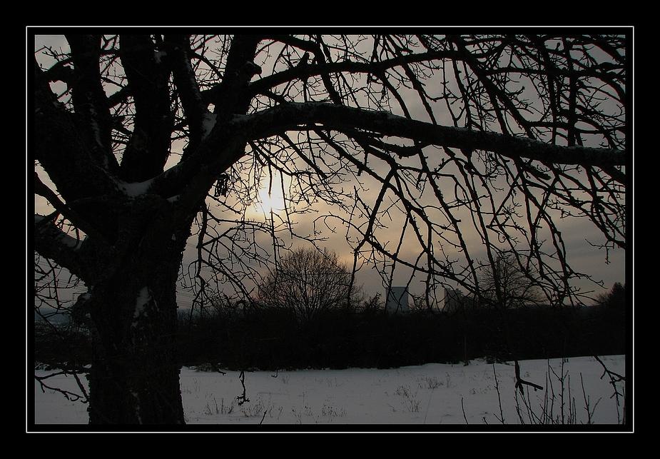 Baum in den Maiwiesen