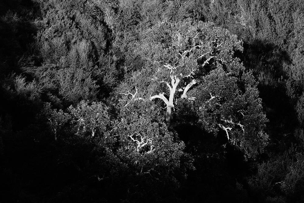 Baum in der Abendsonne von Jorge Maga