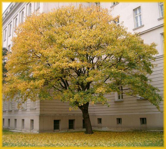 Baum in der Nische