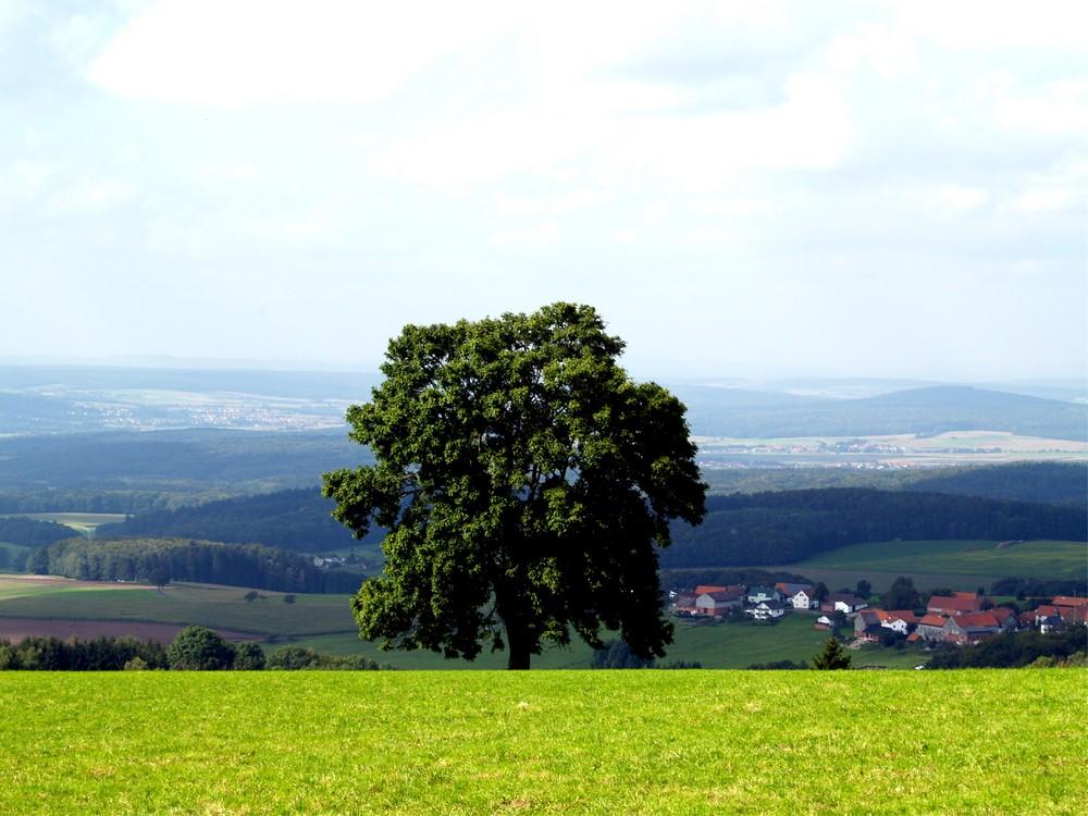 Baum in der Rhön