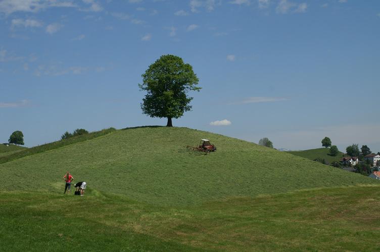 Baum in der Schweiz