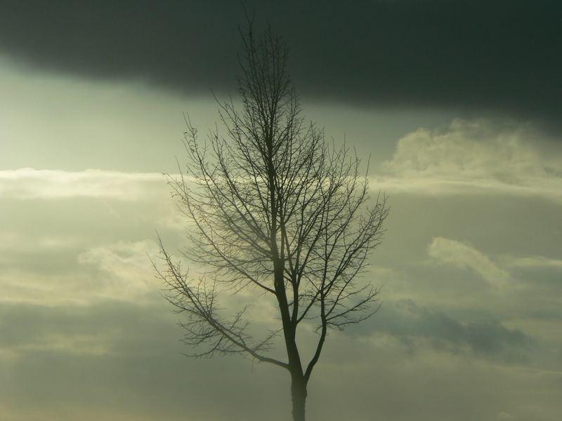 Baum in der Winterdämmerung
