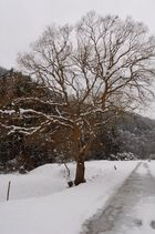 Baum in der Winterlichen Landschaft bei Kreuzberg