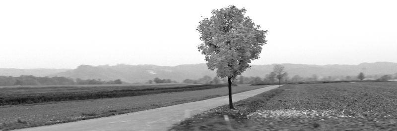 Baum in einsamer ferne