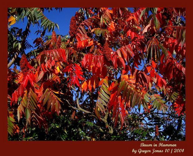 Baum in Flammen II