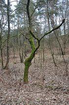 Baum in grüner Tracht