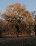 Baum in Herbstfarben