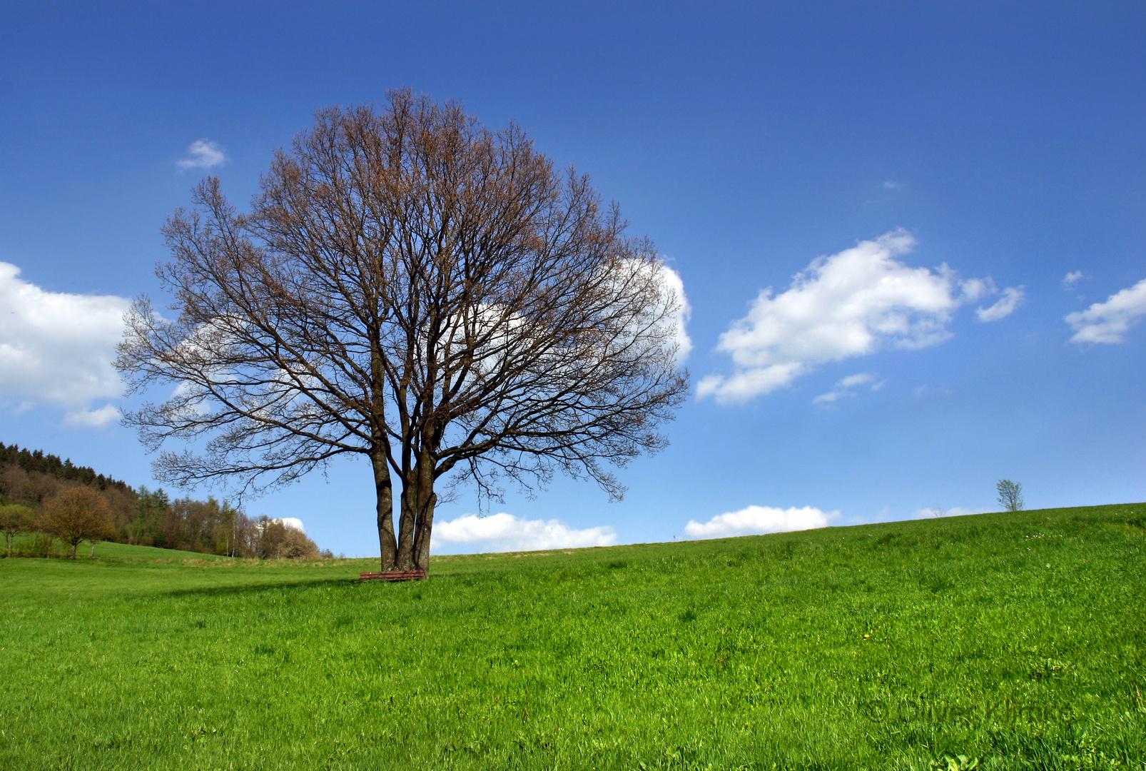 Baum in Hilchenbach-Vormwald