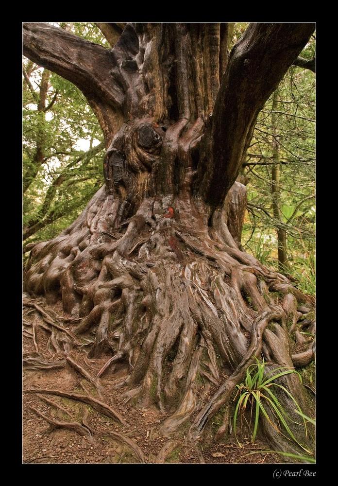 Baum in Irland