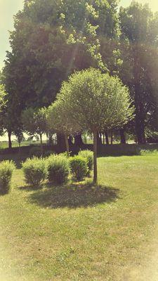 Baum in Jüterbog