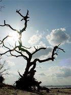 Baum in Loissin am Greifswalder Bodden