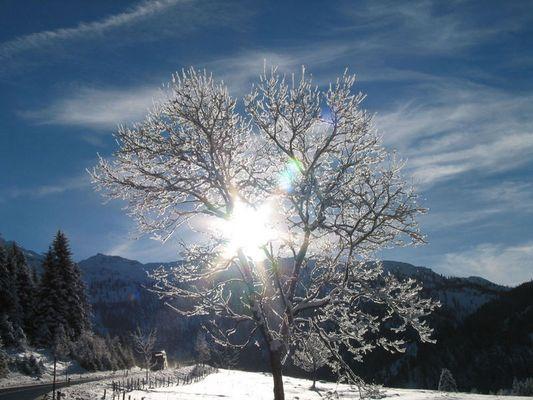 Baum in Obertauern
