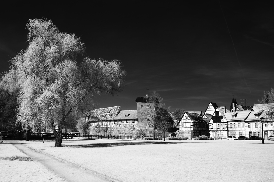Baum in Quedlinburg