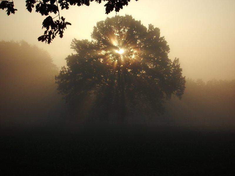 Baum in Scherenbostel