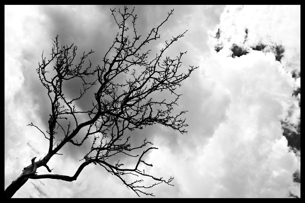 Baum in Schweden