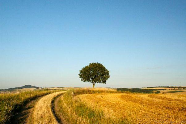Baum in Sommerlandschaft