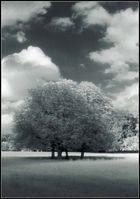 Baum in Weiß