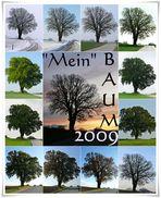 Baum-Jahr 2009