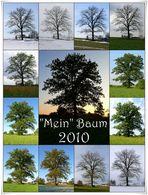 Baum-Jahr 2010