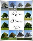Baum-Jahr 2011