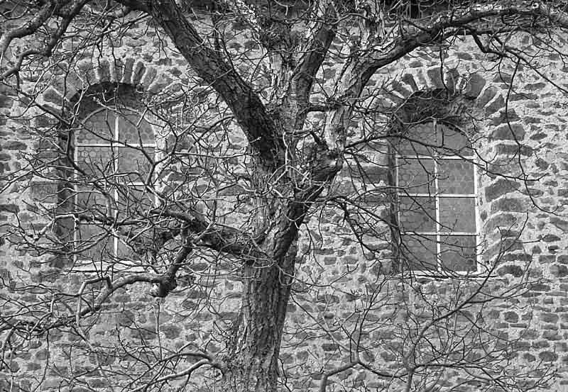baum   kloster