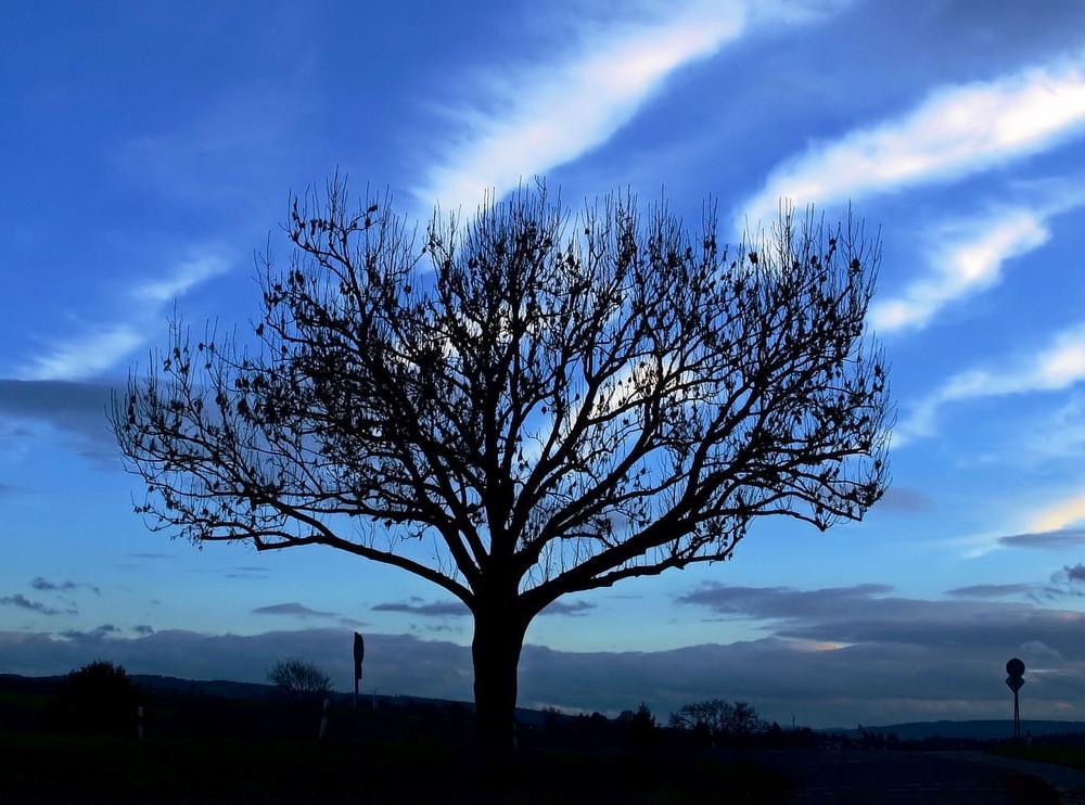Baum Kreuzung