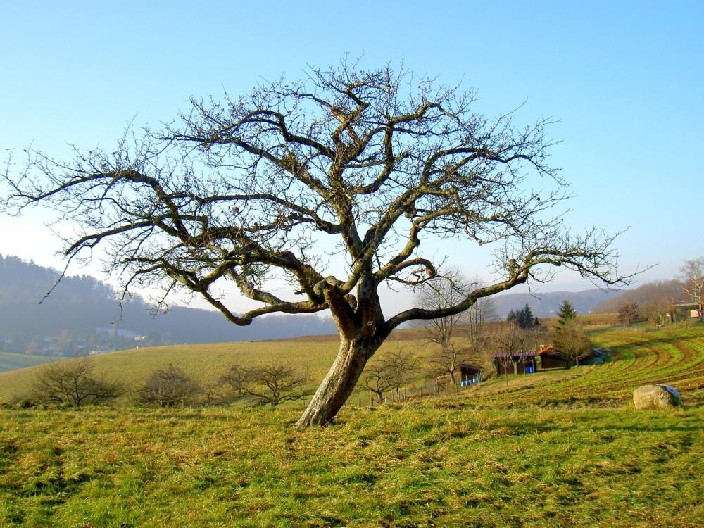 Baum kurz vor seinem Tod