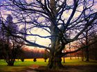 Baum (Laxenburger Schlosspark)